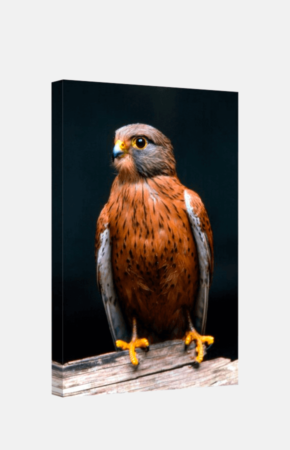 Art print of an eagle on black background